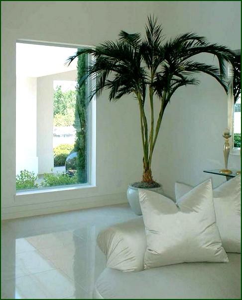 Fotos de decoração de interiores