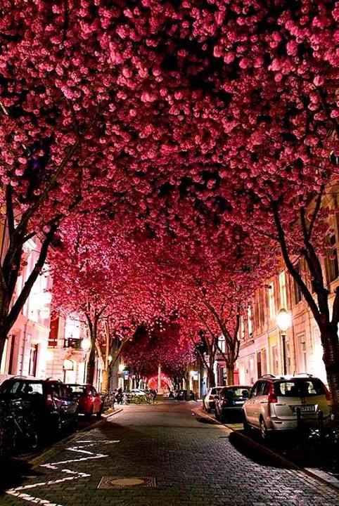 rua decorada com flores