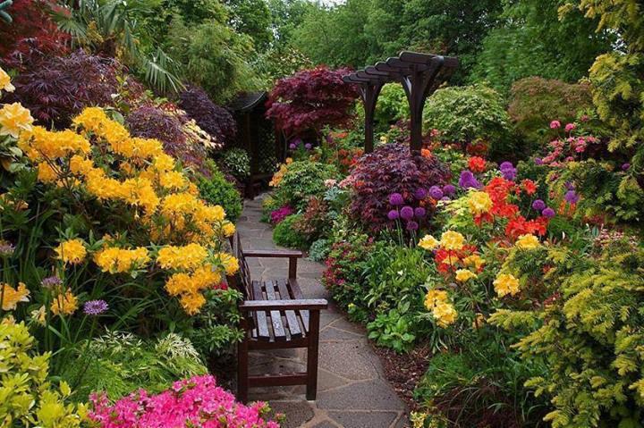 fotos de jardim florido