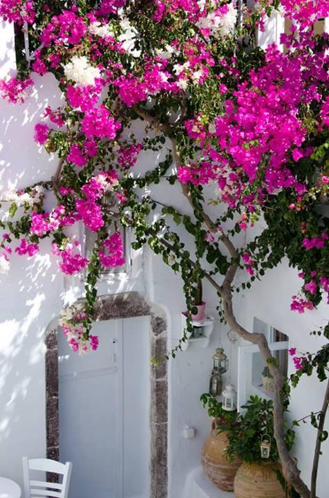 fotos de fachada decorada com flores
