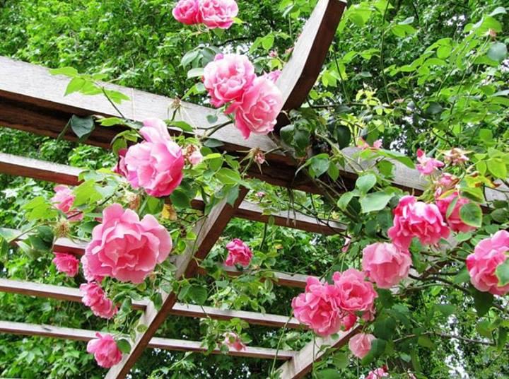 pérgola com flores