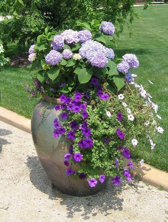 vaso de jardim com flores