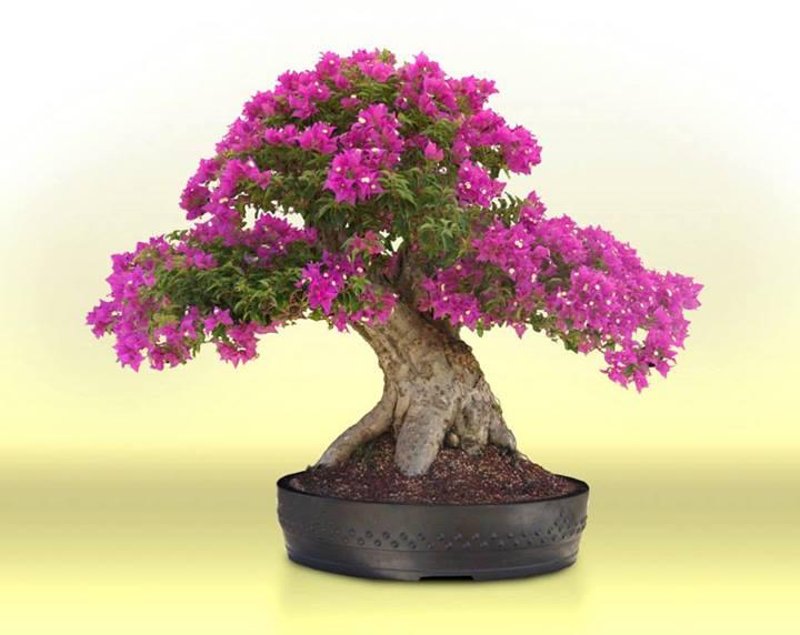bonsai com flores