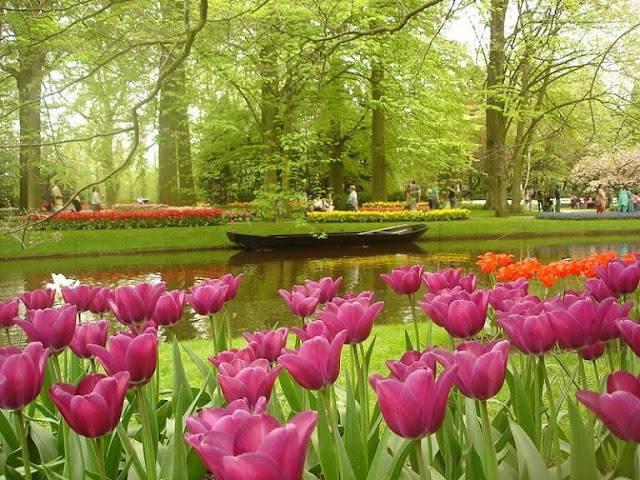jardim decorado com flores (8)