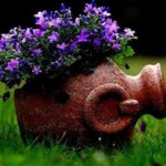 Decoração-de-jardins (2)
