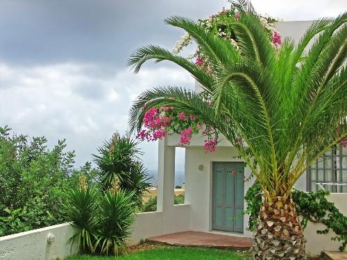 exemplos de jardins decorados com palmeiras na nossa galeria, e