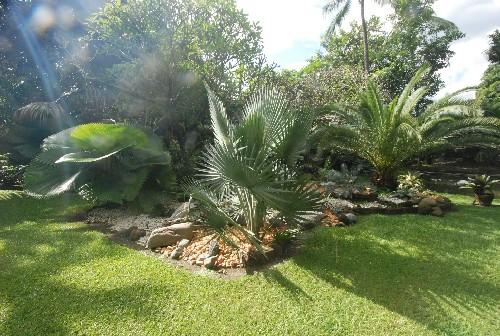 jardins com palmeiras