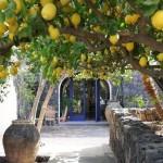 fotos-de-decoração-de-jardim-externo (44)