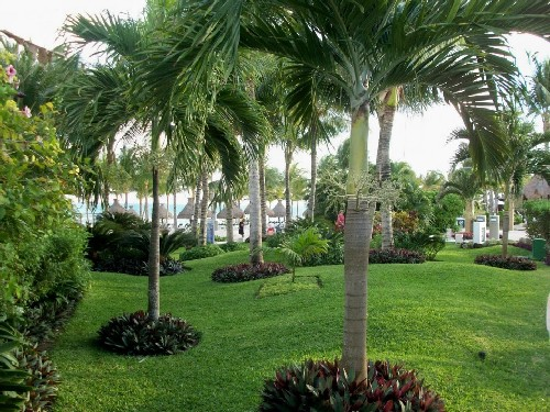 jardins decorados com palmeiras